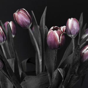 Artful tulips